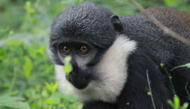 4 days Primate tracking